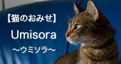 【猫のおみせ】umisora
