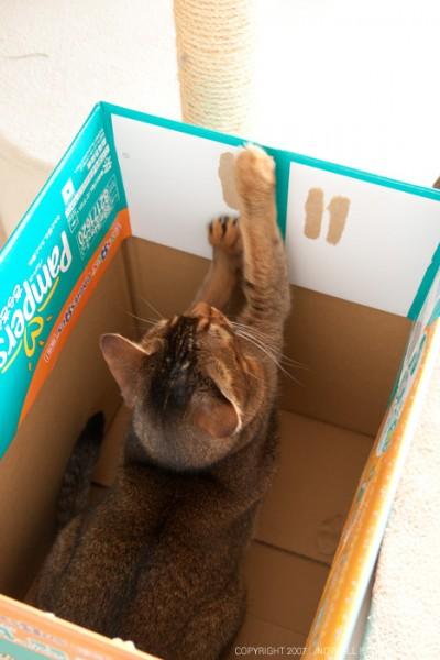やっぱ箱は良いよね〜